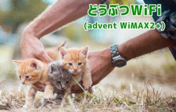 どうぶつWiFi(advent WiMAX2+) トップ画像